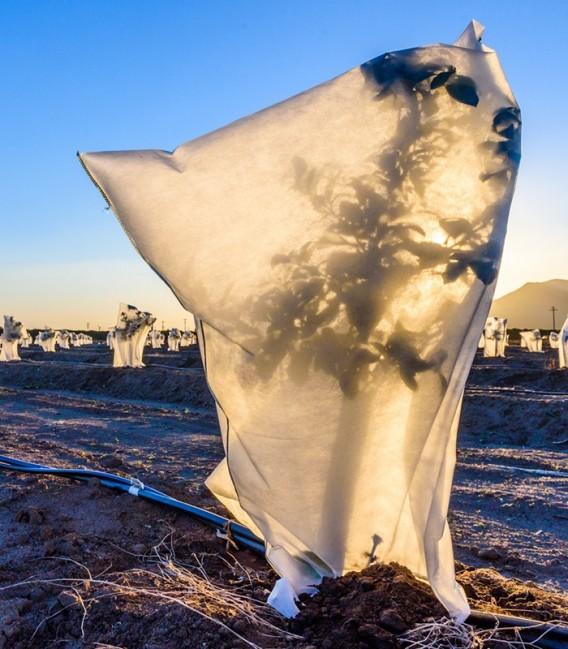 Kaptur ochronny 100x160cm na zimę z agrowłókniny P50g