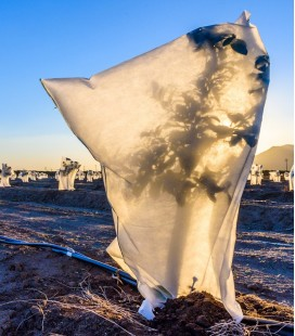 Kaptur ochronny 100x160 na zimę z agrowłókniny P50 (UV)