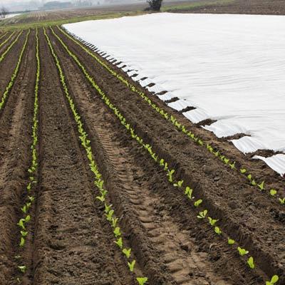 Agrowłóknina czy agrotkanina – porównanie