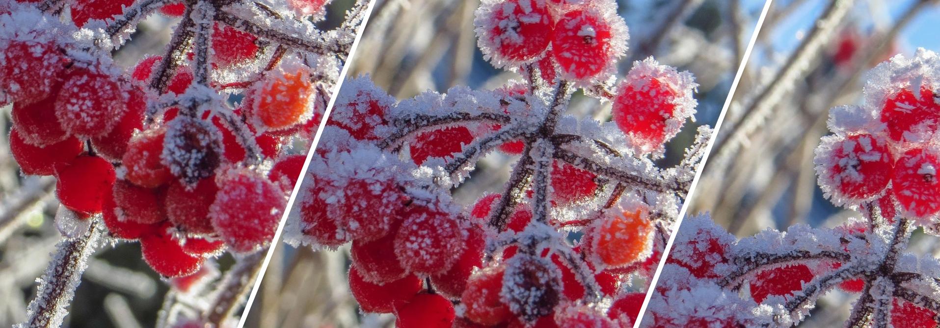 Przygotowanie roślin do zimy