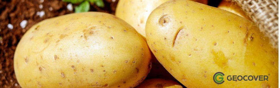 Przechowywanie ziemniaków w kopcach