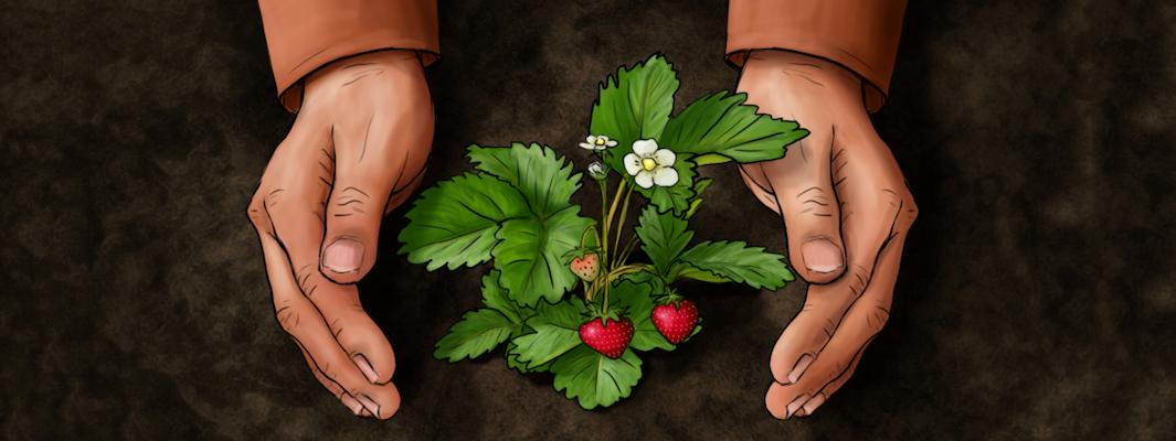 GEOCOVER agrotkaniny i agrowłókniny